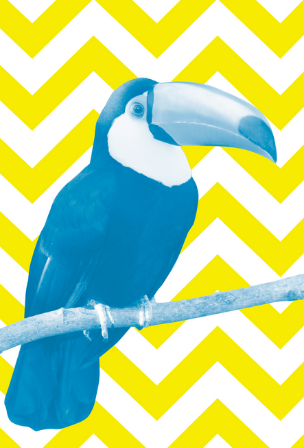 Affiche - Toucan Canvas in Blue and Yellow chez Wall Studio Art