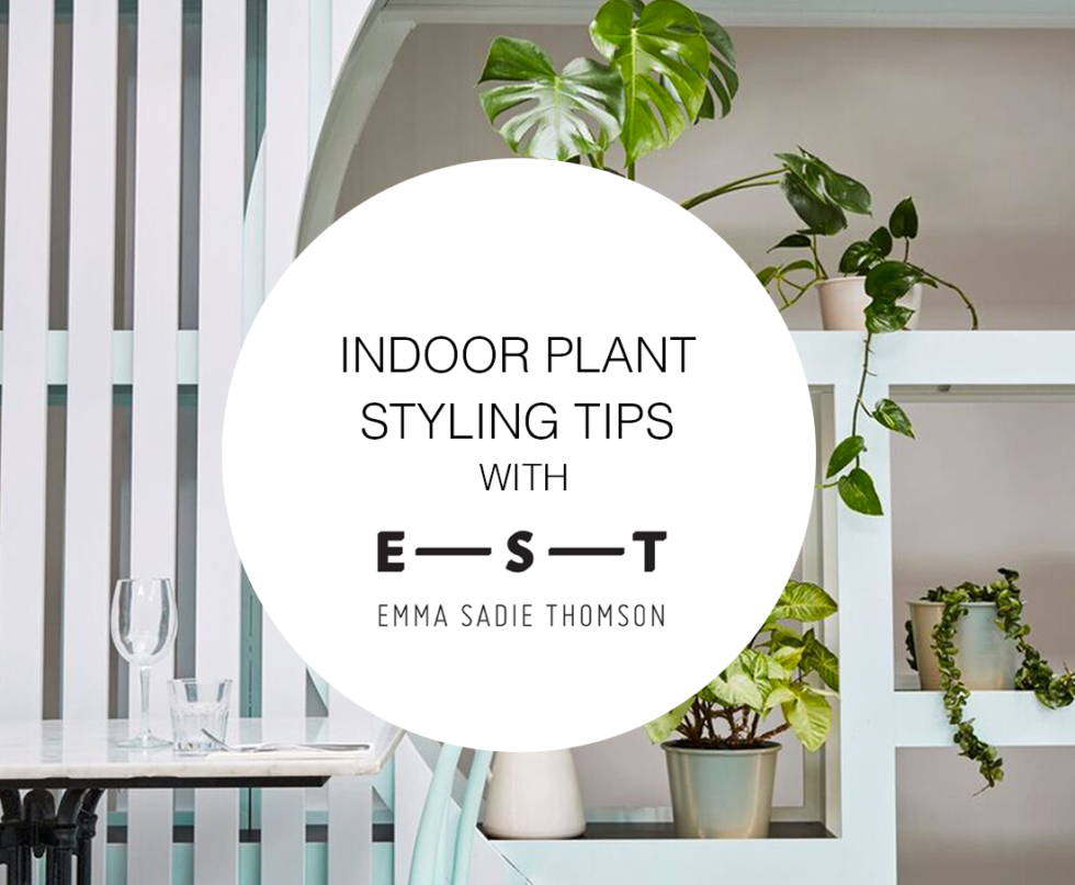 indoor plant styling tips